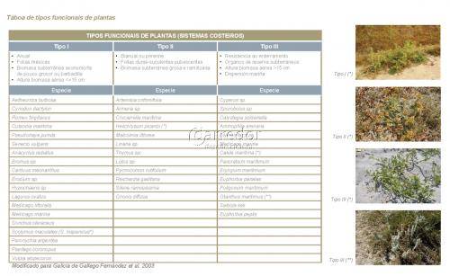Táboa tipos funcionais de plantas
